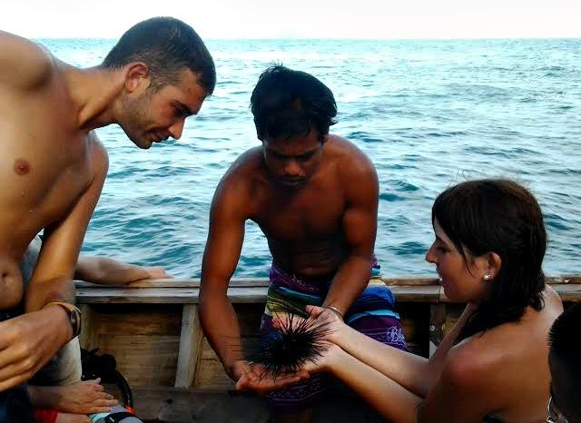 Erizo de Tailandia