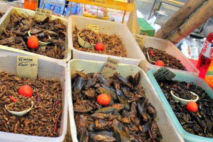 Bichos Tailandia